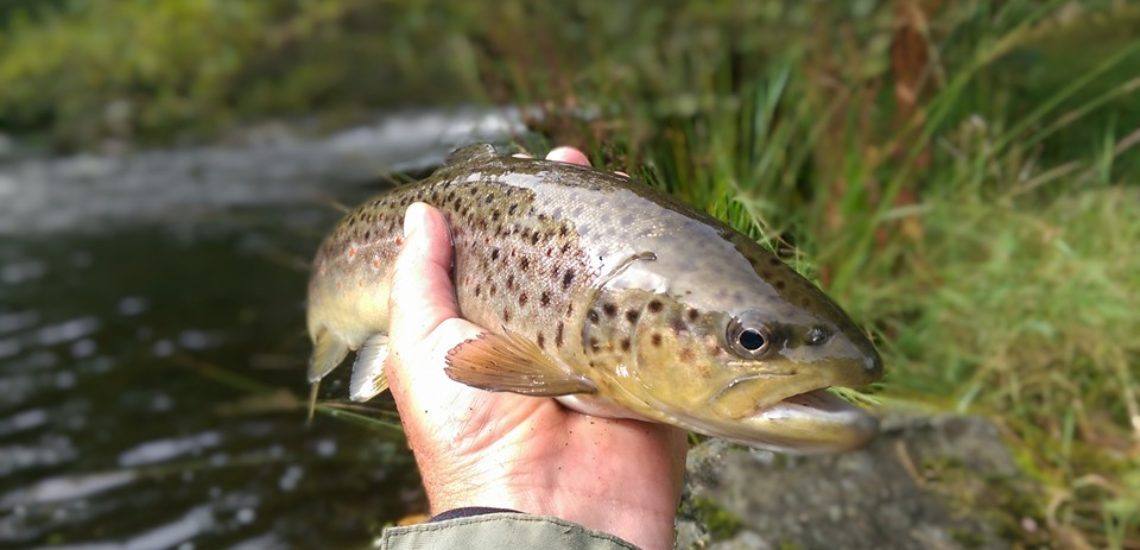 Mid Wales Holiday Lets Fishing breaks in Mid Wales, Rhayader Elan Valley