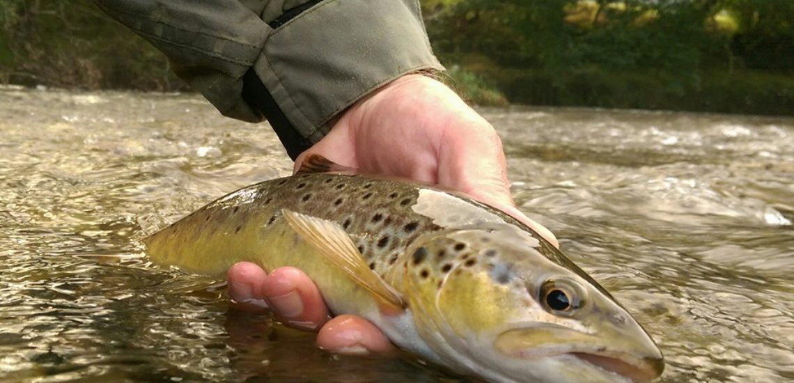Mid Wales Holiday Lets Fishing breaks in Mid Wales, Rhayader Elan Valley