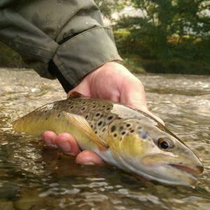Rhayader and Elan Valley Fishing Holiday   Mid Wales Fishing   Fly Fishing